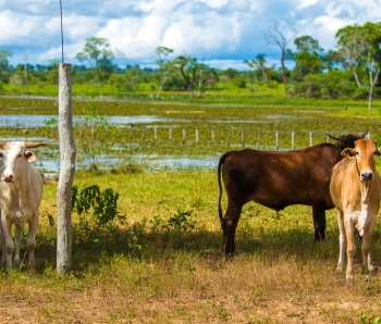 Pantanal-landscape-with-animals