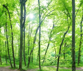 green certified real estate brokerage